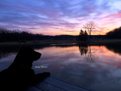 Morning Sentinel (kweaver2) Tags: olympuse520 kathyweaver kweaver2 nature cody dog pond water morning clouds sky sunrise erie pennsylvania reflection reflexions photography landscape