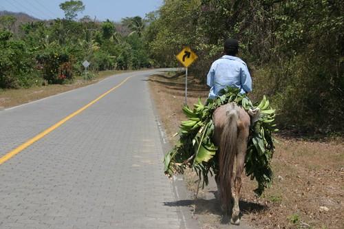 Carrying bananas on Ometepe, Nicaragua.