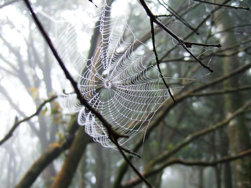 很可愛的蜘蛛網