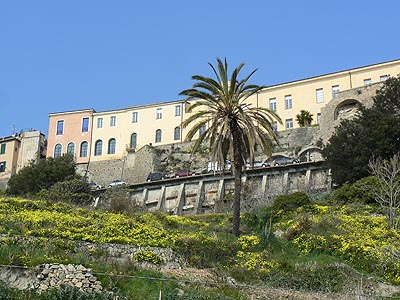 grande maison et palmier.jpg