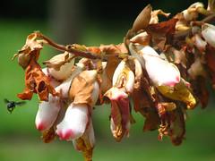 (L) (steph_ie) Tags: flowers flores nature natureza stephaniebastos