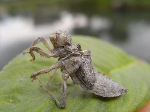 你拍攝的 58變型金剛昆蟲版。