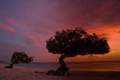 Twin tree sunset (mirellawognum) Tags: sunset red sea sun tree beach island sand violet aruba divi lpsky