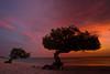 Twin tree sunset (mirellawognum) Tags: sunset red sea sun tree beach island sand violet aruba divi lpsky
