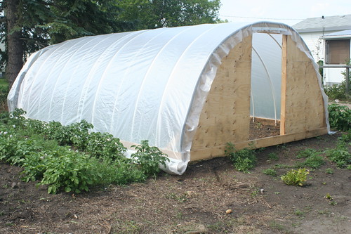 An Inexpensive Hail Proof Pvc Pipe Greenhouse Alberta Home Gardening
