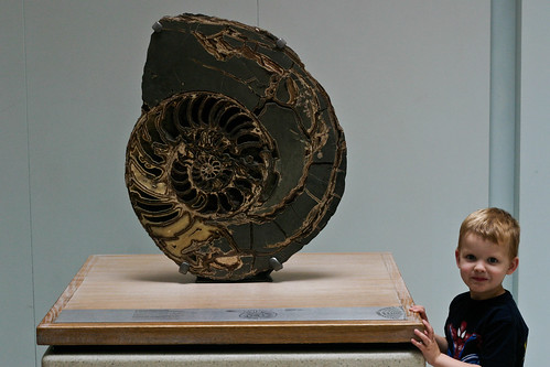Nairn and his ammonite