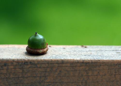 acorn 188/365