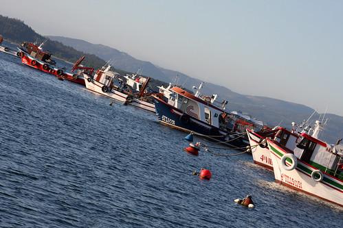 Barcos no porto da Illa