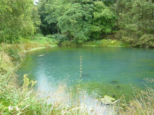 Pond Algea