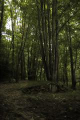 Hobbits! (Cercamón) Tags: barcelona españa naturaleza forest landscape spain catalonia bosque catalunya cataluña bosc montseny