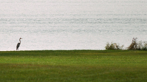 Stalking a Sandhill Crane in Wingra Park