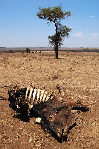 cattle carcass_Kitengela_NNP_border_1