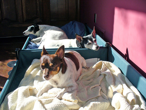 2009-09-30 - Dogs - Sunny Foyer - 0013