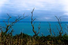 Cool twigs! (MrLeica.com (MatthewOsbornePhotography)) Tags: uk sea coast sticks devon g1 twigs bushes southwestcoastalpath
