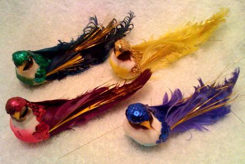 Phoebe birds