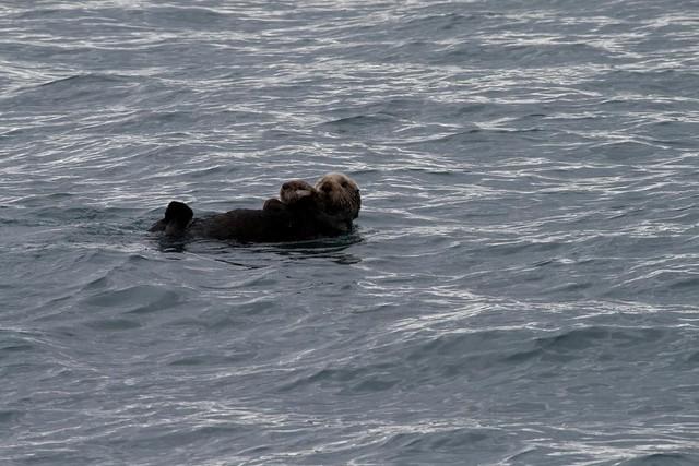 Alaska May 2011 - 532