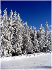 White and Blue (Stella VM) Tags: blue winter sky white snow tree bulgaria spruce vitosha        mywinners  ysplix overtheexcellence