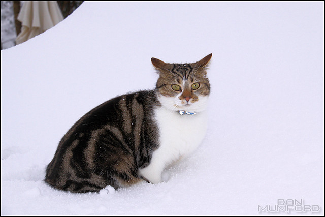 Snow 28