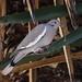 Nesting Behavior
