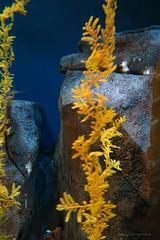 DSC_9061 (sergio.gill) Tags: aquarium penguins jellies georgiaaquarium aquaticlife whalesharks belugawhales thegeorgiaaquarium worldslargestaquarium eightmilliongallonsoffreshandmarinewater