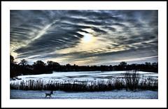 Utterslev Mose #1 (Kenneth McNeil) Tags: blue winter sky copenhagen landscape horizon layers 2009 hdr københavn nordvest utterslevmose scenicsnotjustlandscapes