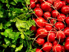 green parsley, red raddishes (ildarabbit) Tags: seattle red green contrast america us washington vegetable fresh wholefoods wa produce 2008 radish 2009 parsely