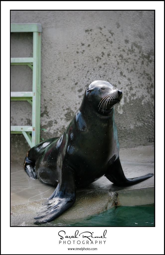 feb zoo 44
