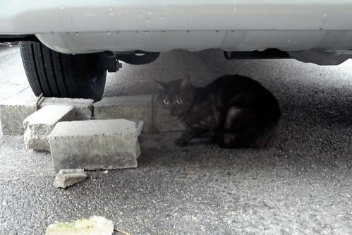 Today's Cat@20090313