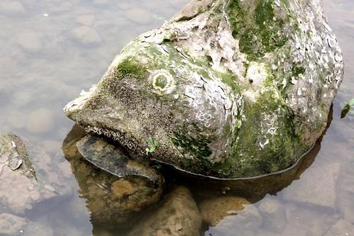 fish head rock