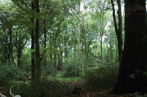 Hattingen woods