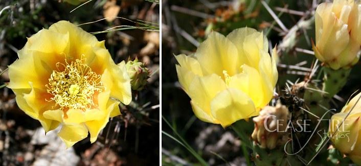 08-06-flowers3