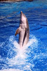 Agilit sopraffina (ThePetrock) Tags: sea fish nature animals jump mare blu natura dolphins pesci colori animali riccione delfino simpatia bolle delfinario salti oltremare evoluzioni d80 cetacei tursiopi
