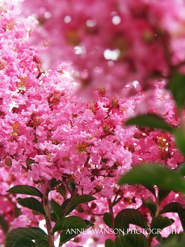 flowery pink
