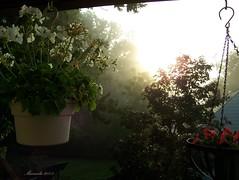 Good Morning ! (marinela 2008) Tags: morning flowers trees red sky plants sunlight white house green nature sunrise garden day cincinnati mysterious geraniums marinela2008