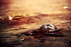 Dark Water (Jeremy Snell) Tags: ocean above light red sea orange water face set sunrise dead blood breath 85mm floating surface alive