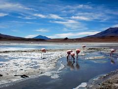 BOLIVIA (C▲ÓTIC▲ CECILI▲, C▲ÓTICA YO) Tags: light desert bolivia paisaje paisagem viajes desierto animales pure andino altiplano andean deserto uyuni sudamérica mybigtrip2009