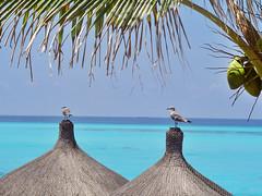 Isla Mujeres – Mujeres Island (Carlos Carreño) Tags: méxico mexico island seagull mujeres isla gaviota caribe