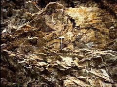 Val Caronella (Andrea  Perotti) Tags: tesi geologia rilevamen
