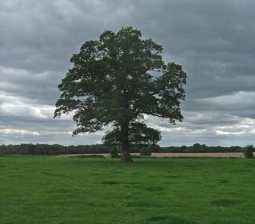 woodlandsfarm-tree