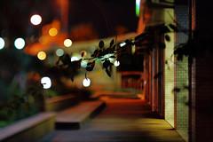 2017/1812^:z# (june1777) Tags: street night zeiss canon eos bokeh snap jena clear f carl seoul adapter 5d 3200 tilt f28 80mm czj biometar hartblei v18 bokehlicious gaepodong