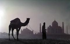 0168 The Greatest monument built for Love--Taj Mahal , Agra , India (ngchongkin) Tags: india niceshot tajmahal harmony showroom soe flymetothemoon nationalgeographic iap musictomyeyes inthemood goldheart peaceaward flickrgoldaward flickrhearts flickraward flickrbronzeaward flickrsilveraward heartawards artistsoftheyear wonderfulphotosoftheworld yourpreferredpicture beautifulaward thebestshot thirdlife discoveryphotos qualifiedmembersonly yourarthastouchedtheworld universalelite photographerparadise artofimages angelawards friendswhocare perceptiongroup visionaryartsgallery andromeda50 jotbesgroup expressyourselfaward platinumpeaceaward bestcapturesaoi richardsgold artistsoftheyearplatinumhalloffame livinglifebehindthelens youandtheworld pegasusaward flickrsgottalent bestpeopleschoice theverybestpeopleschoice mygearandme mygearandmepremium mygearandmebronze mygearandmesilver mygearandmegold flickrawardgallery goldstarawardlevel1 ringexcellence dblringexcellence flickrbronzetrophy soelevel2 excellentgallery photographyforrecreationgoldaward photographyforrecreationemeraldaward photographyforrecreationsilveraward photographyforrecreationbronzeaward photographyforrecreationsapphireaward museodefotos digitographer thethreeangelslevel2 thethreeangelslevel1 freeadminworld voicesofearth vivalavidalevel1 photographyforrecreatiodiamondaward materclassaward artistoftheyearlevel6