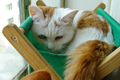 Xiaochou in basket (qchen) Tags: cat   sonydscv1  cc200 cc100  kissablekat bestofcats kittyschoice pet100 catmoments alittlebeauty