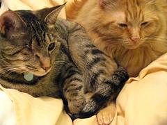 Maggie sitting on Jasper's paw