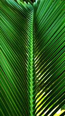 Só uma folha (Fernanda Maia Ramos) Tags: light verde green luz nature arquitetura natureza arquitecture palmeira inhotim wwwmundofotograficocombr