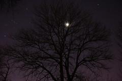 Moonlight (35 / 365)