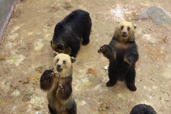 2009北海道-D2-5-昭和新山熊牧場_05.jpg
