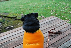Custom Fleece Dog Jacket