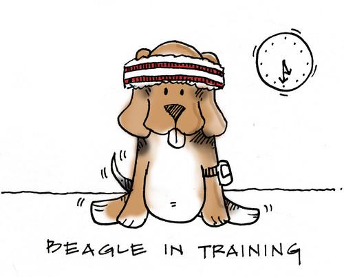 beagle fonda