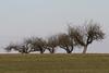 Trees - IMG_0896ax