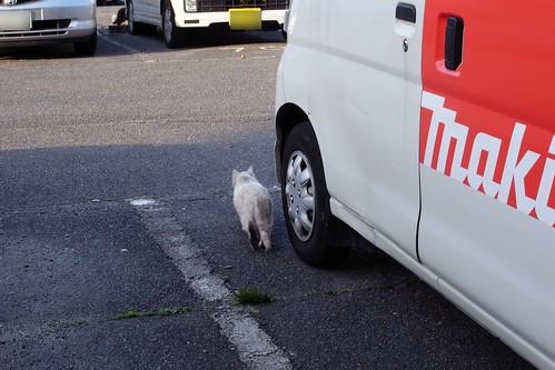 Today's Cat@20090323